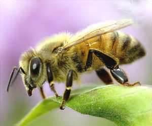 Bee 2013